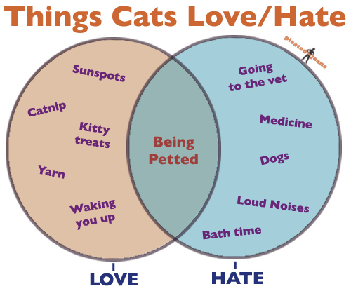 Things Cats Love/Hate