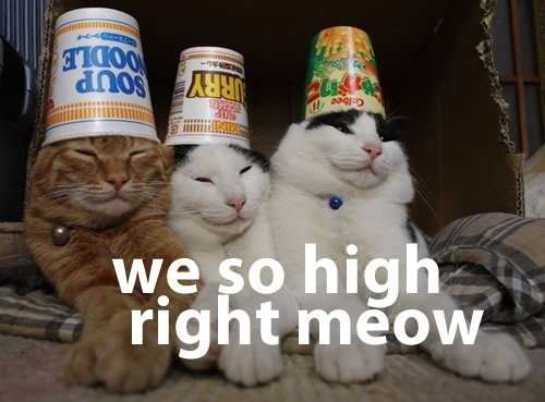 These Cats Are High