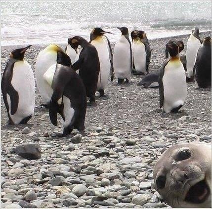 Best Animal Photobomb Ever