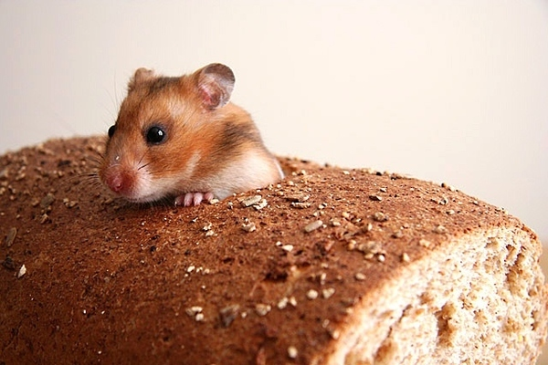 Have You Ever Seen an Inbred Mouse?