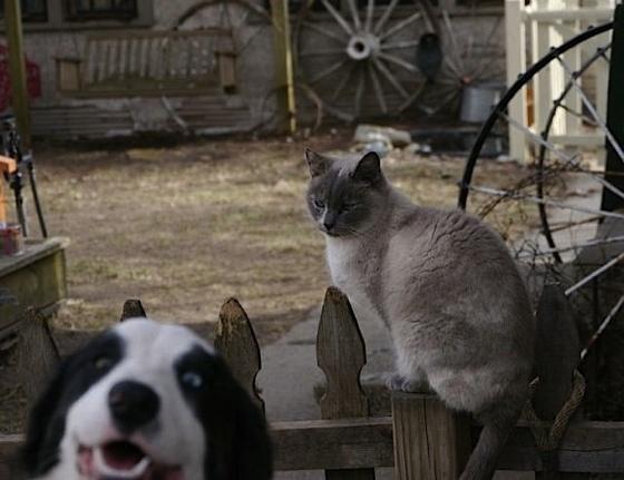 Dog Photobombs Cat