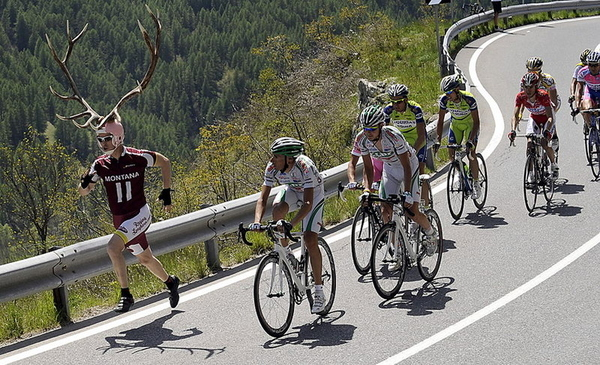 The Tour De France, My Deer