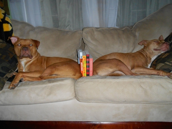 Doggy Bookends