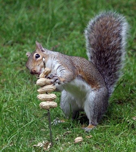 Squirrel Kabob