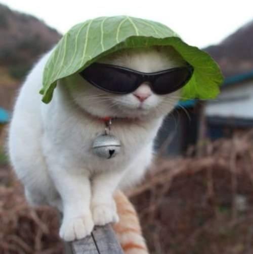 Hep Cat