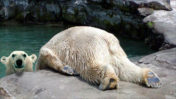 Polar Bear Horsemanning