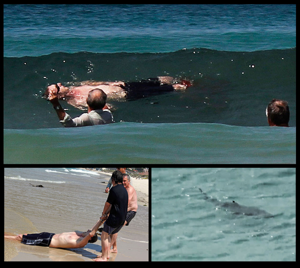 Shark Attack in Capetown! Saved by Two Brave  Men and a Seal!