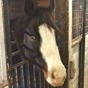 poppyismyhorse's avatar