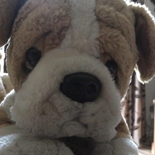 Bulldog86's avatar