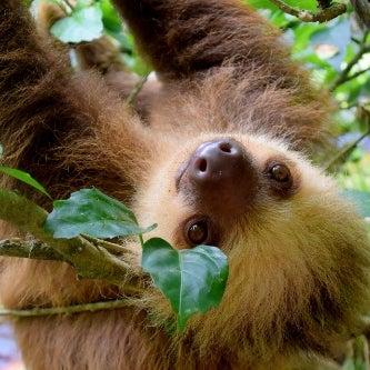 Sloth Girl's avatar