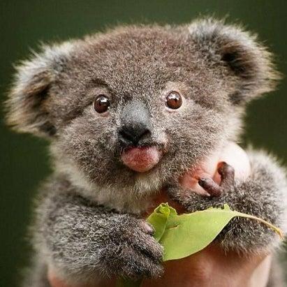 chubbypinkkoala's avatar