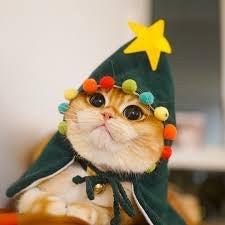magiccatz's avatar