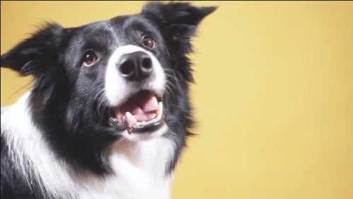 doggoluver's avatar