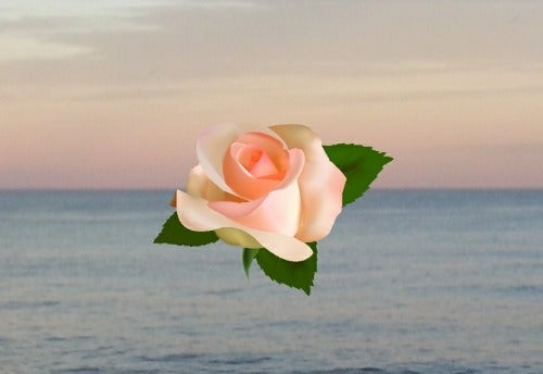 Lylie Rose's avatar