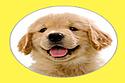 Puppystream