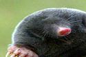 The C-SPAN Mole