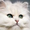 kitty_queen
