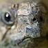 Tortoise Blog
