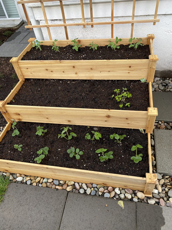 reviewer image of garden bed with small plants growing