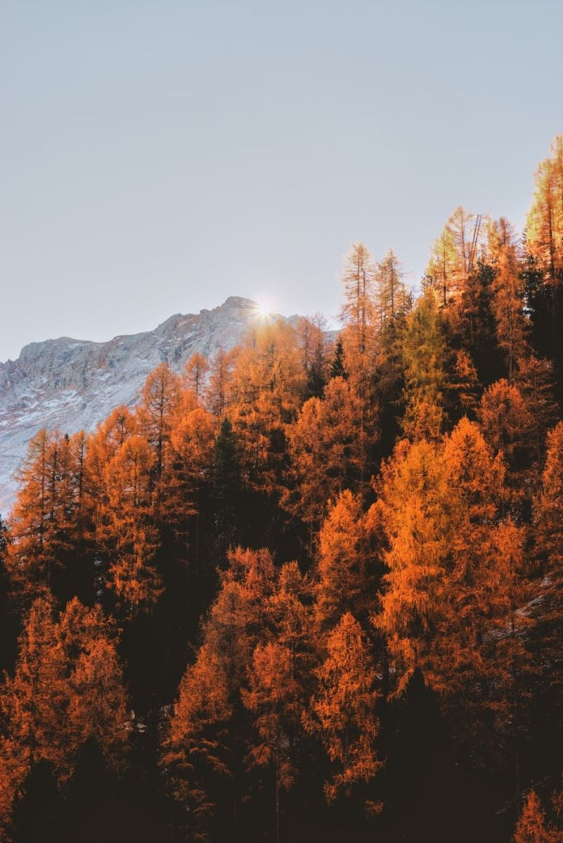 Golden Tree Scenery in Italy