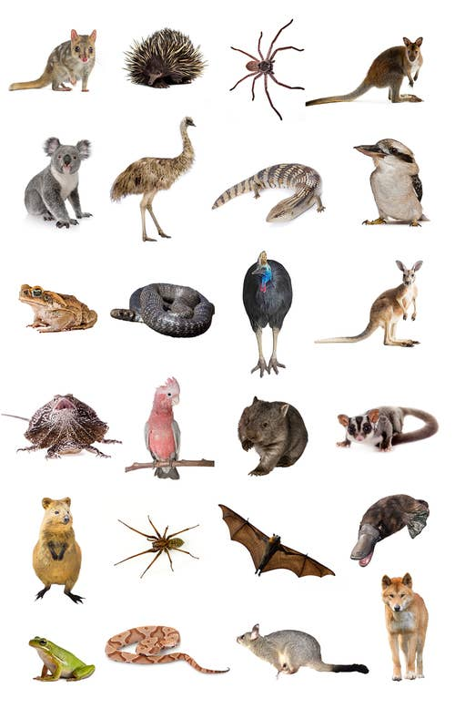 Most People Can't Identify 15 Of These Aussie Animals – Can You?
