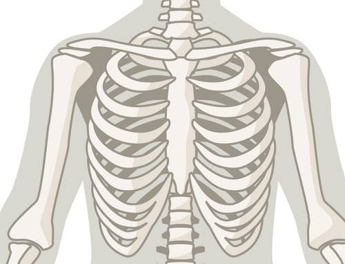 If You Can Correctly Identify All 25 Of These Bones, You