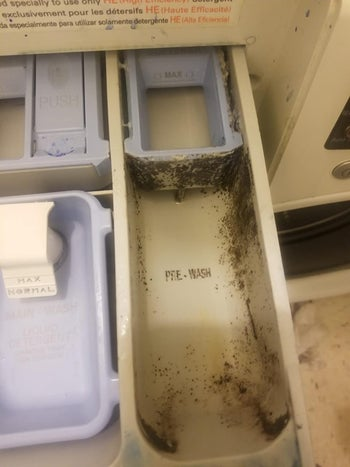 moldy washing machine