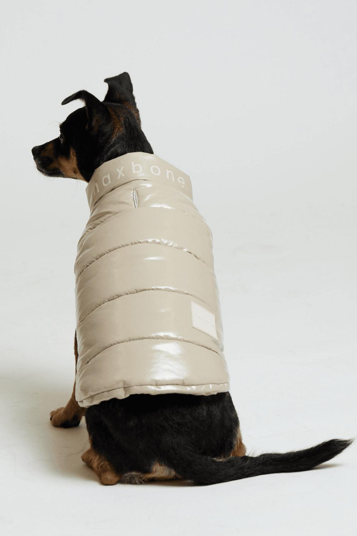 a dog in a tan puffer vest