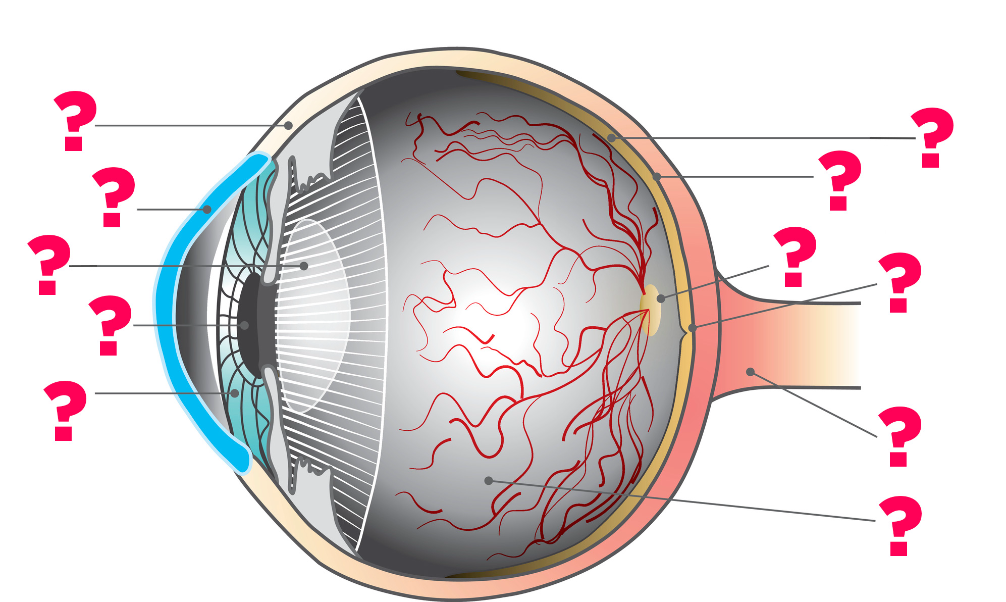 eye diagram for quiz wiring diagram read Eye Diagram Coloring Page eye diagram quiz game ngs wiring diagram cerebral cortex diagram quiz can you get 11 11