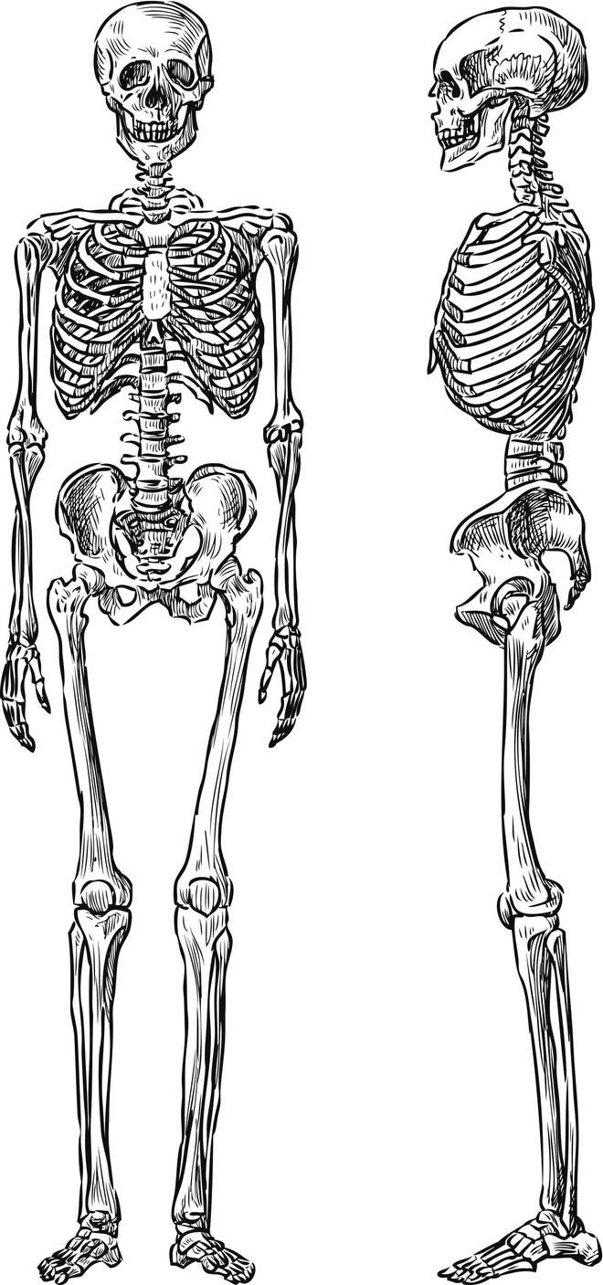 Only A Skeleton Expert Can Get Over 1317 On This Anatomy Quiz