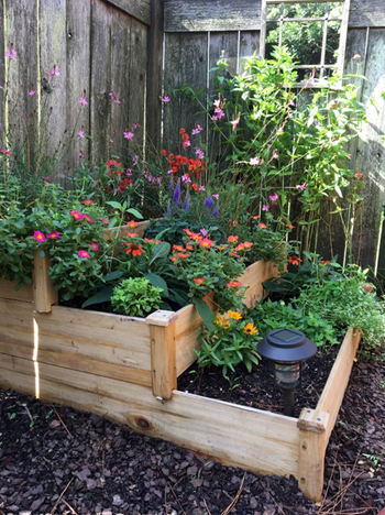 different reviewer's garden bed filled with flowers