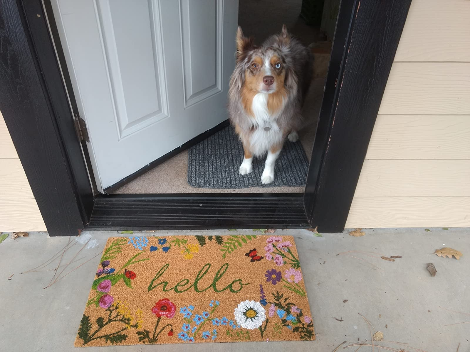 reviewer's dog at the door with the brown and colorful floral mat that reads