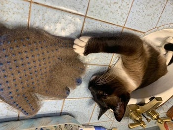 Cat next to glove absolutely full of fur