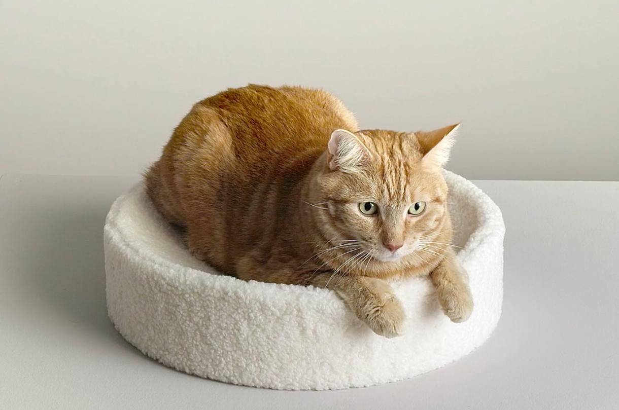 cat sitting on the round cushion