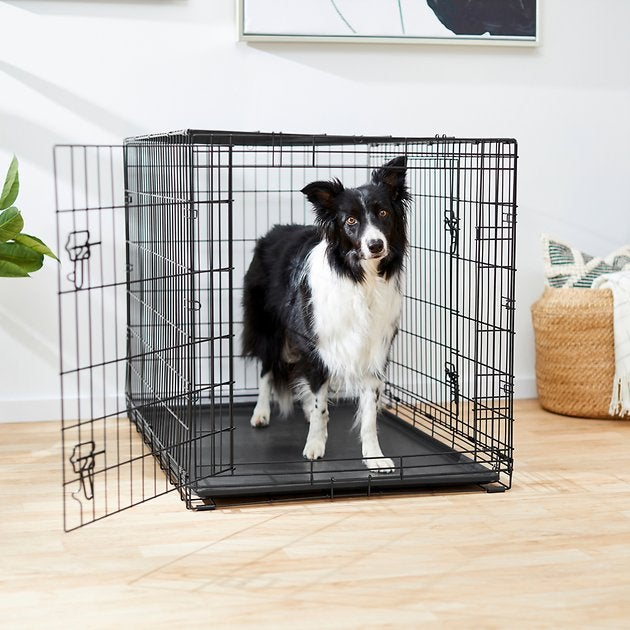 A medium-size collie in the black wire crate