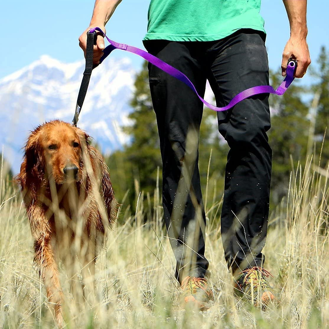 A dog being led by a leash with two wide gripper handles