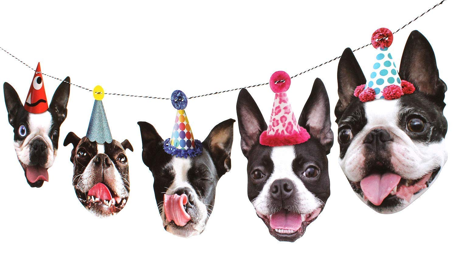boston terrier faces with party hats