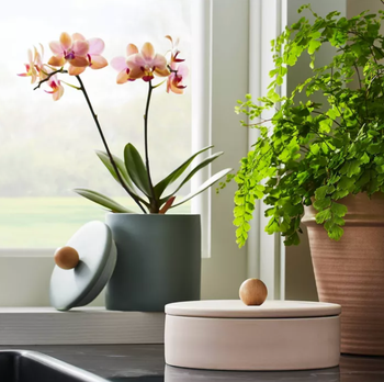 the sage jar holding an orchid