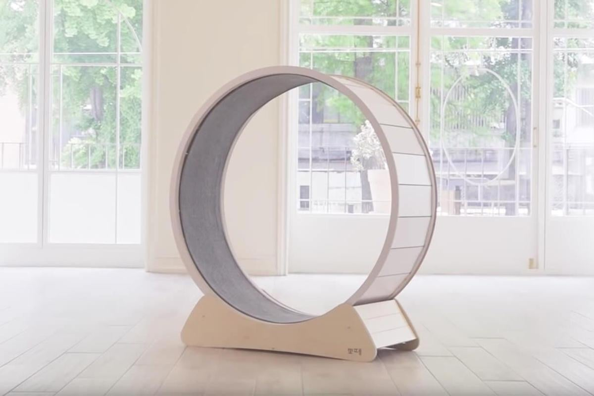the white cat wheel, which has a light-colored wood base