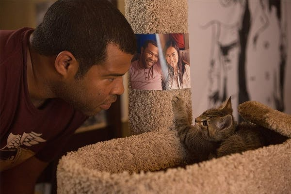 Keanu stands over a kitten, watching it play on a cat tower
