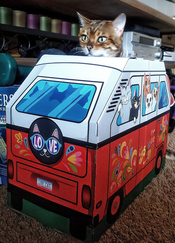 cat peeking head out of the cardboard camper, decorated with cat designs and to look like other cats are looking out the windows