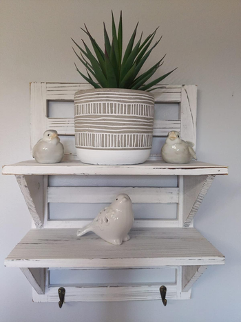 plant in textured white pot on a reviewer's bookshelf