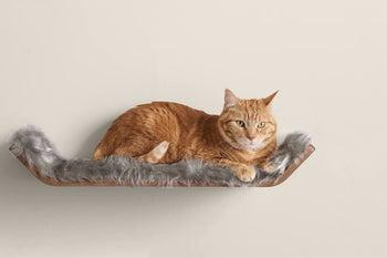 A tabby cat lying on the shelf