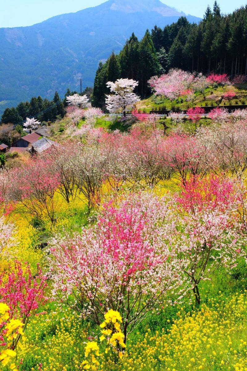 Kumakohgen, Japan,