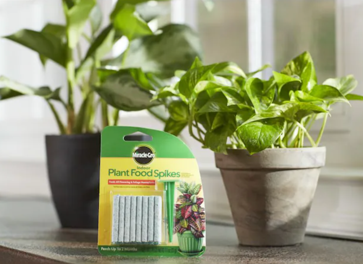 package of Plant Food Spikes next to plants