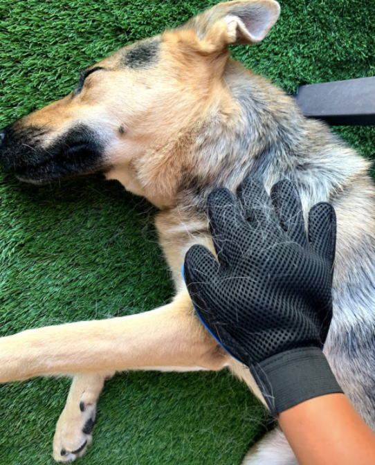 A customer review photo of them petting their dog with the glove