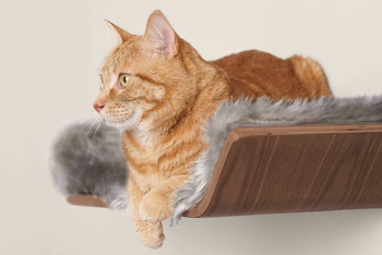 close-up of cat lying on the shelf, which has a soft gray furry liner