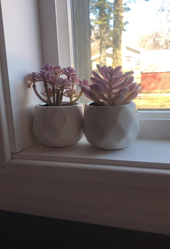 two on a reviewer's windowsill
