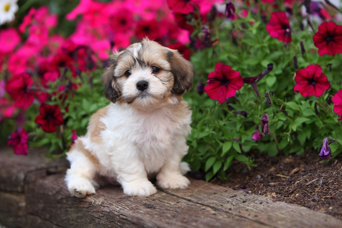 A fluffy puppy sitting on a wooden bench near a flower bush