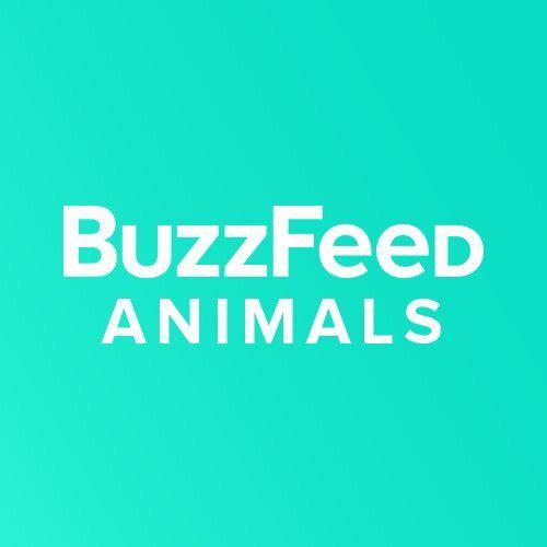 buzzfeedanimals icon